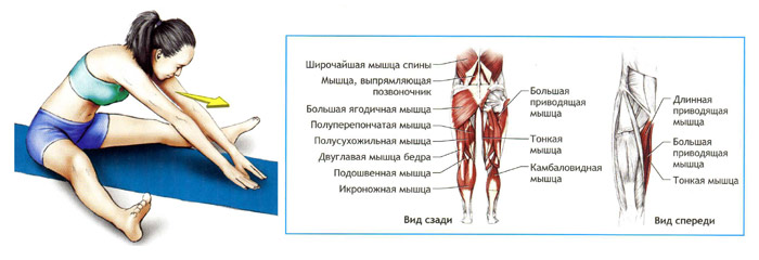 Растяжение паховой мышцы лечение в домашних условиях