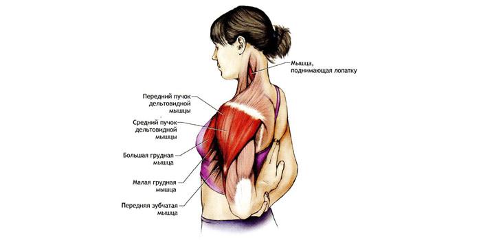 Медики характеризуют ощущения больного при этом заболевании как «замороженное плечо»: настолько скованными в движениях становятся мышцы пораженного плеча.