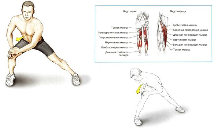 Упражнения для растяжки мышц тазобедренного сустава разрыв связки путового сустава у лошади